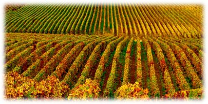 Description: French Wine Regions