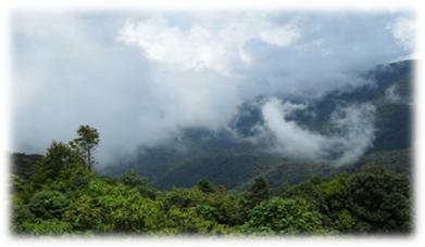 Clouds Gunung Brinchang Cameron highlands Malaysia